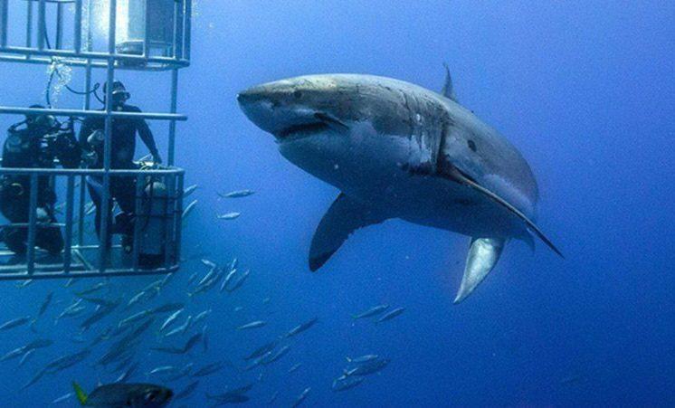tiburones-mito